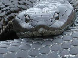 Black corporate serpent dominates and then slithers away from Onkwehonwe.