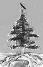 weapon under tree