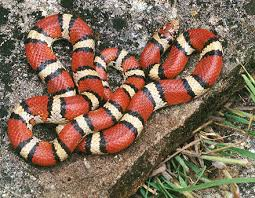 They're all the same. White-Red-Black Serpents joined forces.