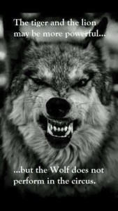We learnt the one mind from the wolf. With the one mind, we can never be defeated.
