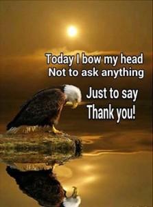 eagle thanks