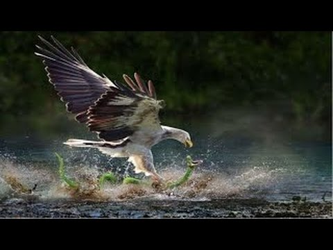 Eagle sends the serpent where it come from.